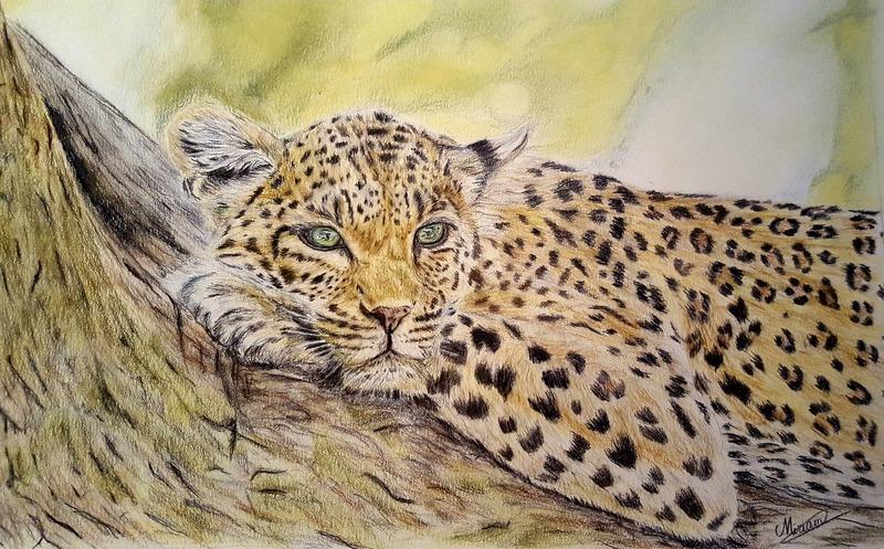 Miriam Nijboer - Luipaard in rust