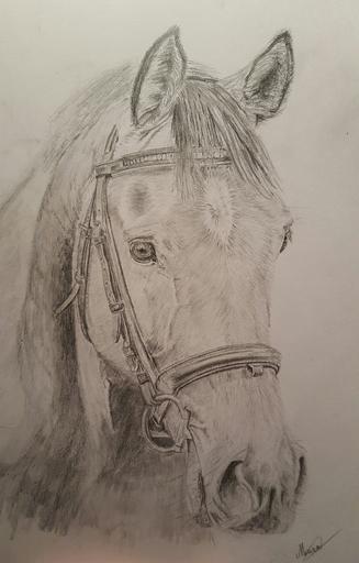 Miriam Nijboer - Grafiet tekening van een prachtig paard